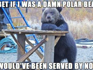 race baiting bear